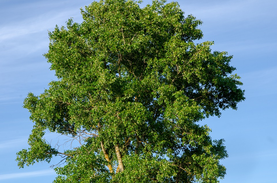Foliage, Linden, Sky, Tree, Green, Colorful, Nature