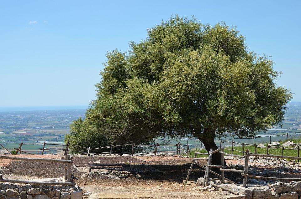 Green, Landscape, Tree, Nature, Olive Tree