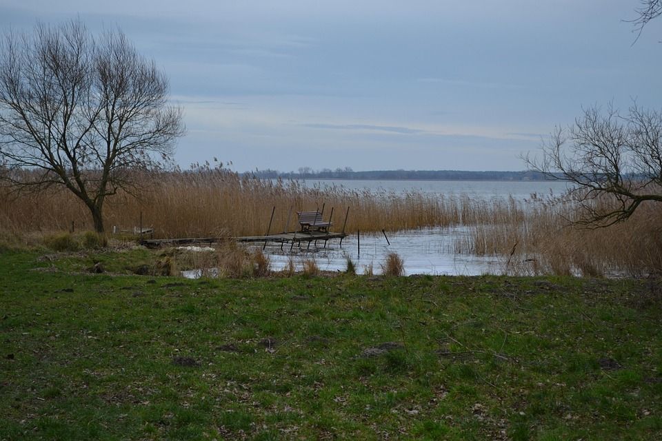 Island Of Usedom, Web, Tree, River Landscape, Nature