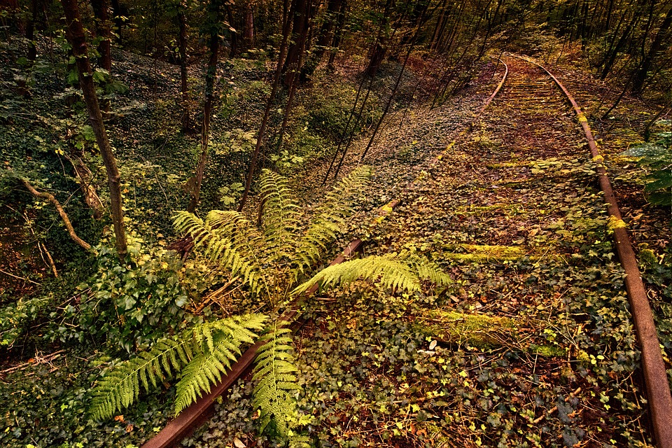 Nature, Leaf, Tree, Plant, Ivy, Forest, Seemed, Route