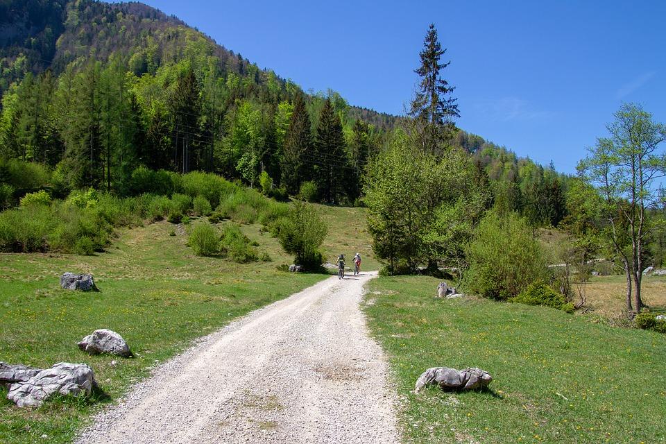 Sport, Mountain Bike, Nature, Landscape, Tree, Grass