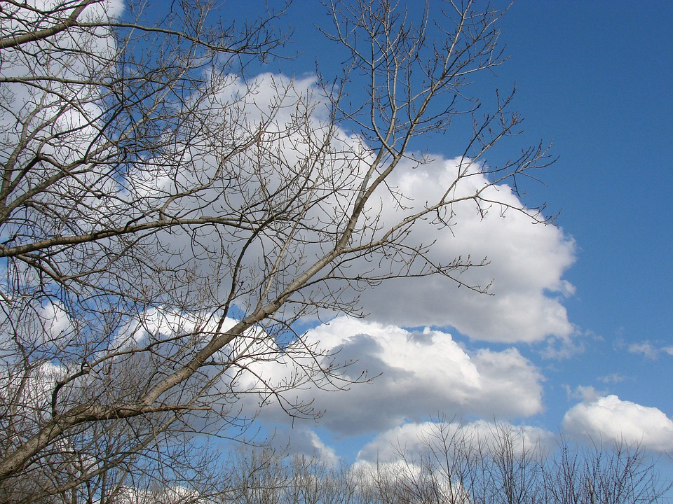 Sky, Clouds, Blue, Tree, Nature, Sunshine, Landscape