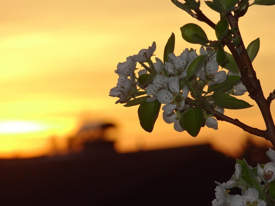 Nature, Tree, Plant, Leaf, Flower