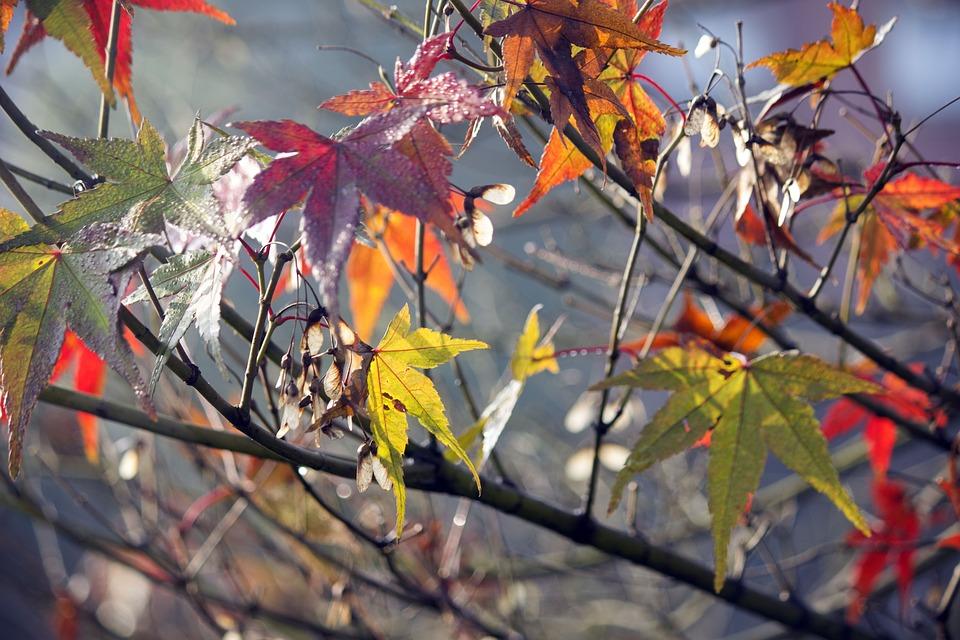 Leaf, Tree, Nature, Season, Branch
