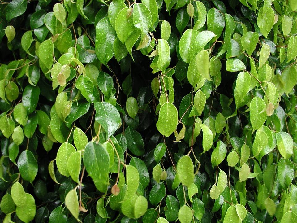 Leaves, Nature, Tree, Rocio, Plants