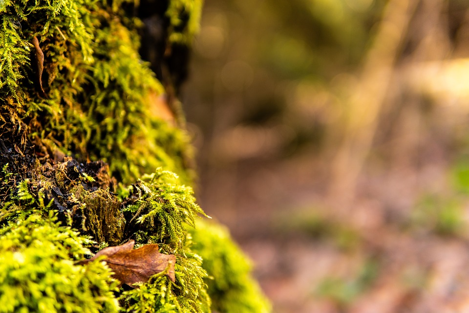Moss, Branch, Forest, Nature, Aesthetic, Green, Tree