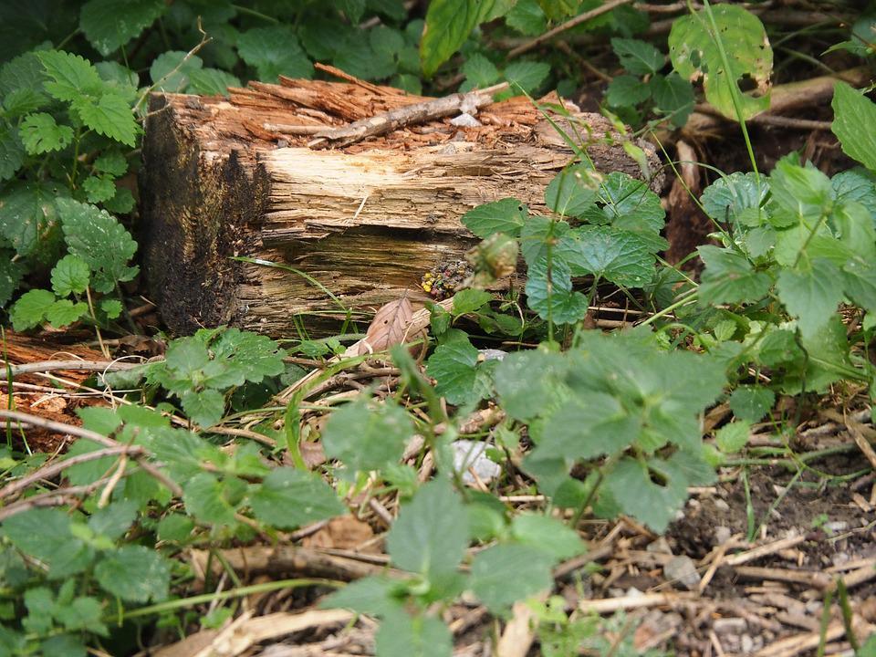 Wood, Tree Stump, Log, Structure, Nature, Forest