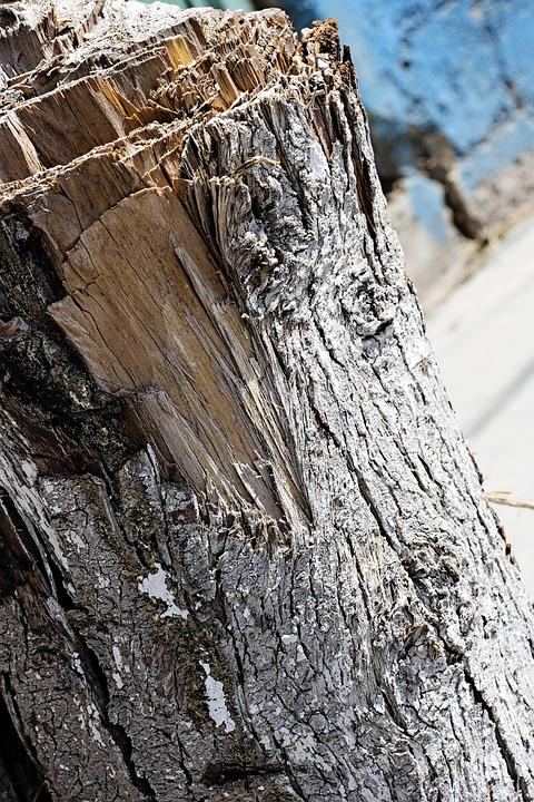 Stump, Brown, Nature, Tree, Wood, Old, Wooden, Texture