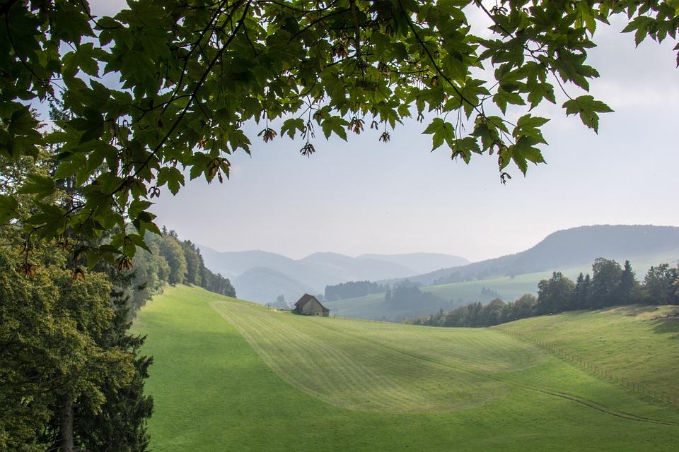 Tree, Landscape, Nature, Panorama, Grass, Summer, Hill