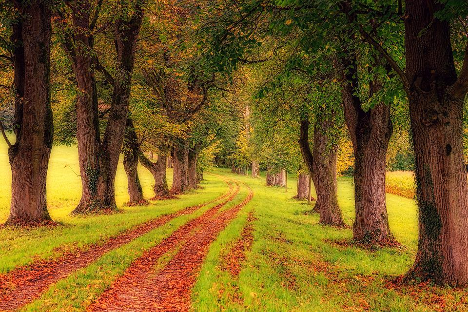 Tree, Avenue, Nature, Landscape, Tree Lined Avenue