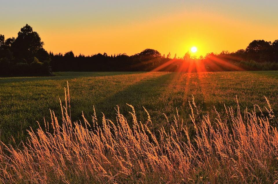 Sunset, Go, Värnamo, Sweden, Landscapes, Tree, Nature