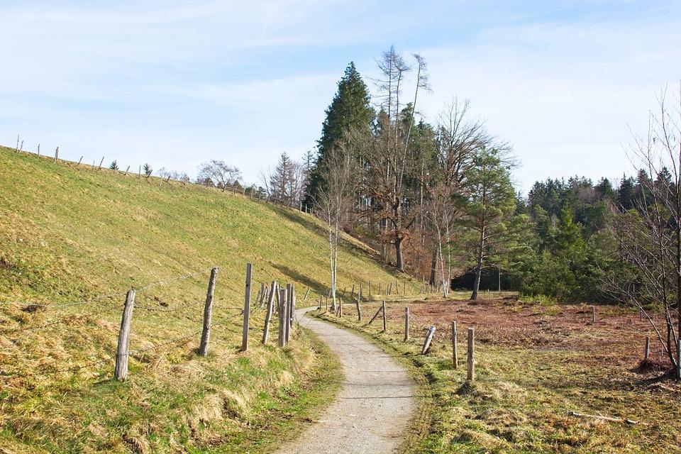 Spring, Nature, Trees, Away, Frühlingsanfang, Idyllic