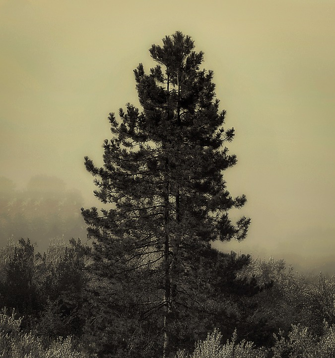 Fog, Autumn, Trees, Nature, Leaves, Branches