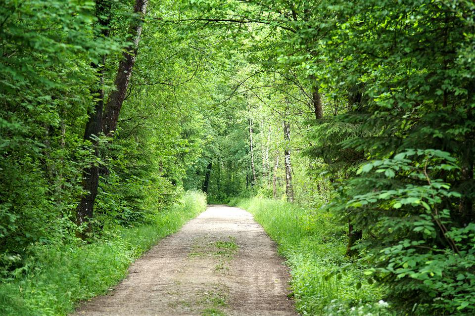 Forest, Away, Nature, Trees, Forest Path, Trail
