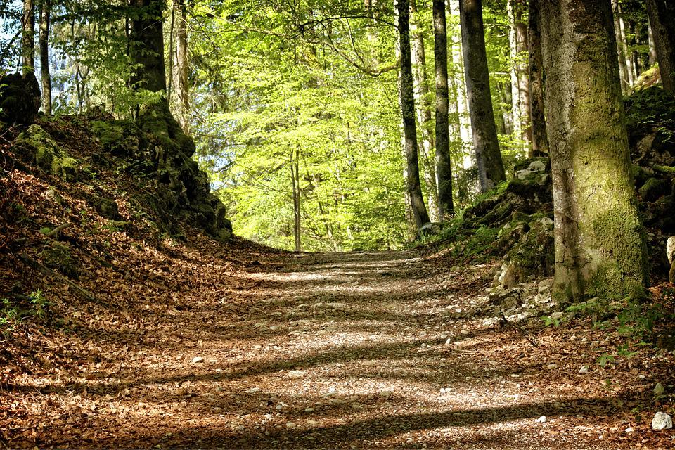 Trees, Away, Forest Path, Nature, Forest, Recovery