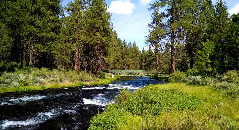River, Collier Park, Oregon, Trees, Green, Nature
