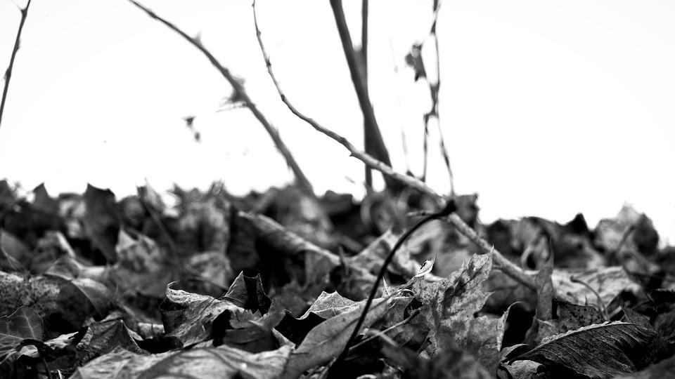 Leaves, River, Water, Park, Trees, Landscape, Nature