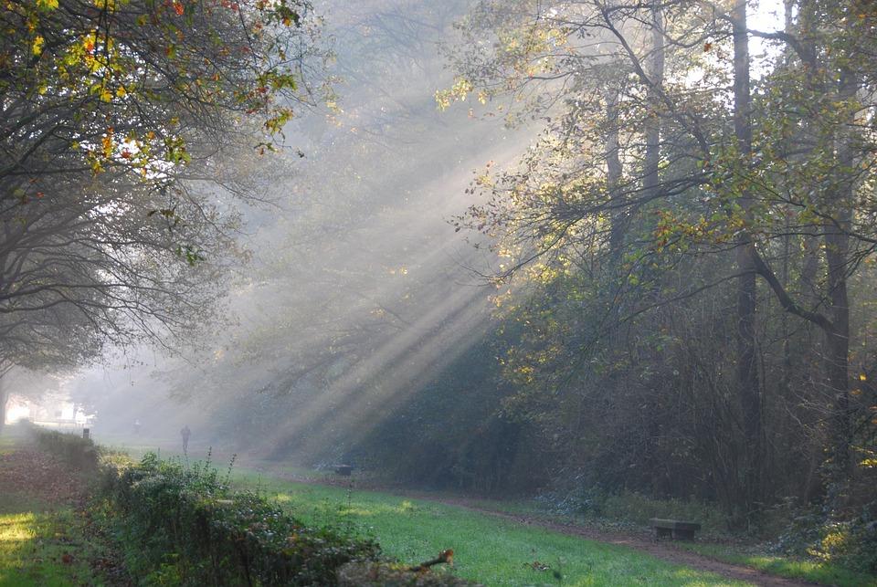Rays Of Sunshine, Light, Trees, Ray Of Light, Nature
