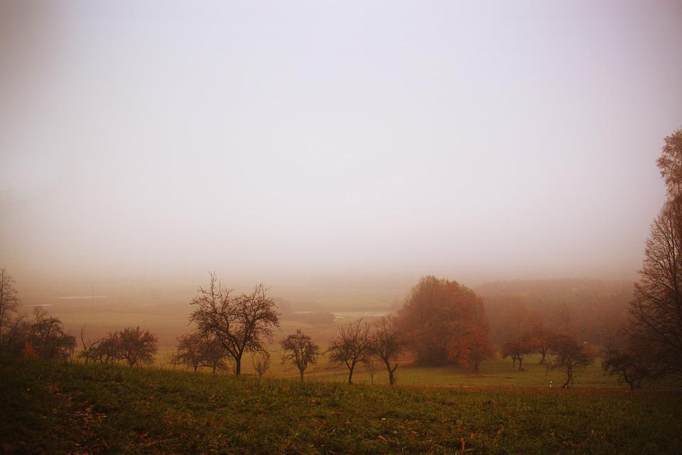 Autumn, Nature, Landscape, Fog, Trees, View, October