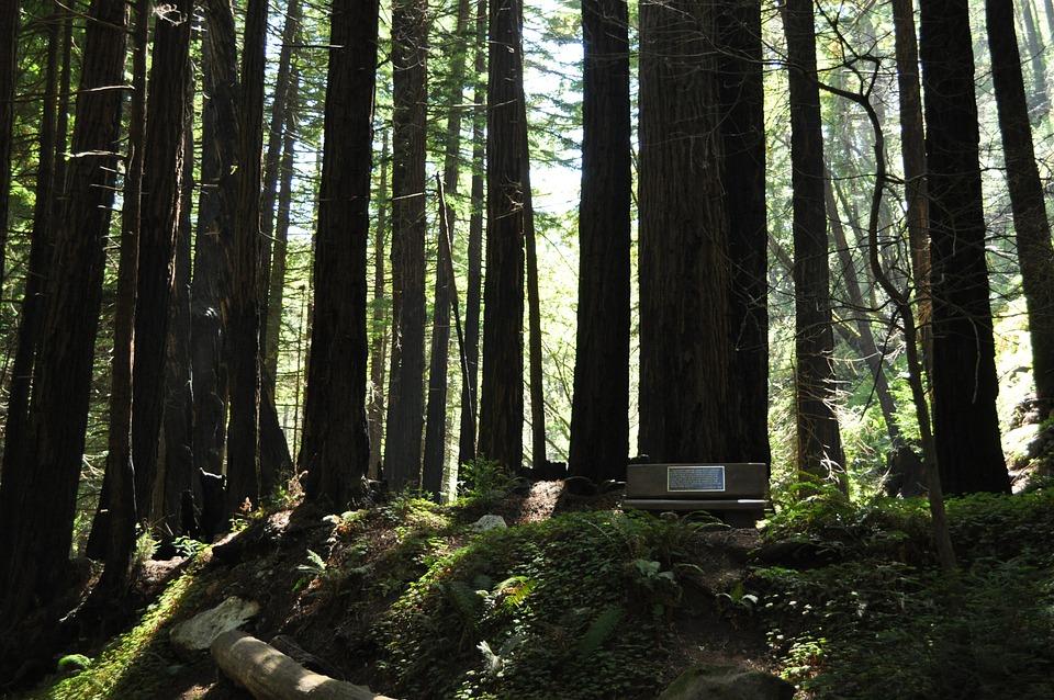 Trees, California, Big Sur, Nature, Outdoors, Woods