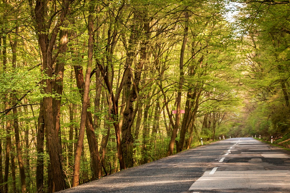 Path, Trees, Forest, Nature, Car, Transport, Jungle