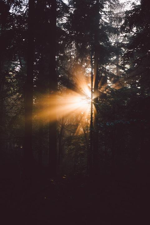 Trees, Plants, Nature, Forest, Sunshine, Sunrise