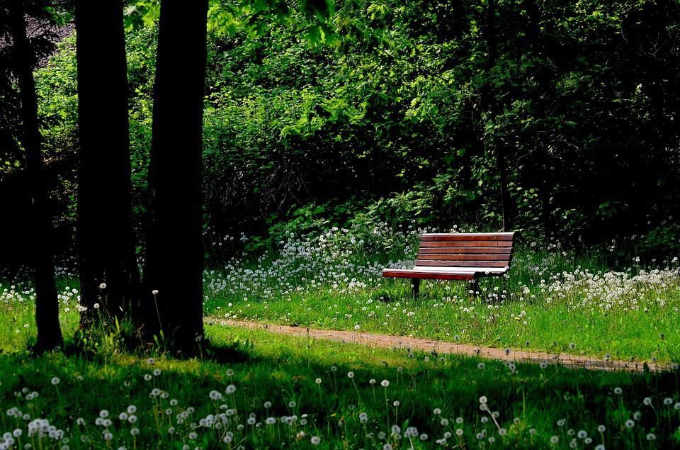 Bench, Nature, Trees, Leaves, Forest, Green, Trail