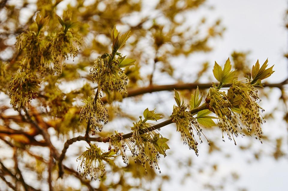 Spring, Tree, Park, Trees, Nature