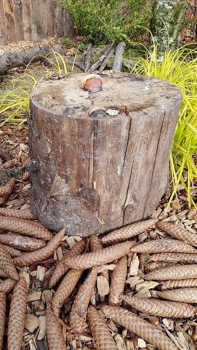 Tribe, Floor, Oak, Fir, Wood, Green, Nature, Moss, Old