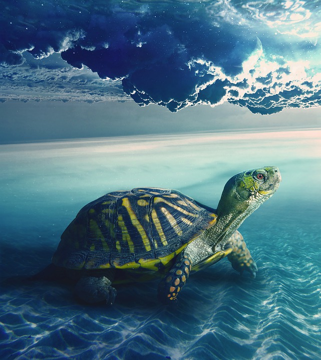 Turtle, Sky, White, Gray, Underwater, Nature, Sea