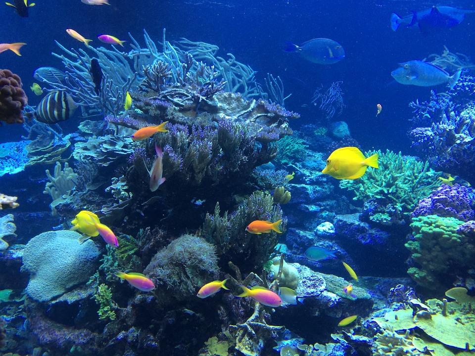 Underwater, Fish, Tropical, Ocean, Nature, Reef, Coral