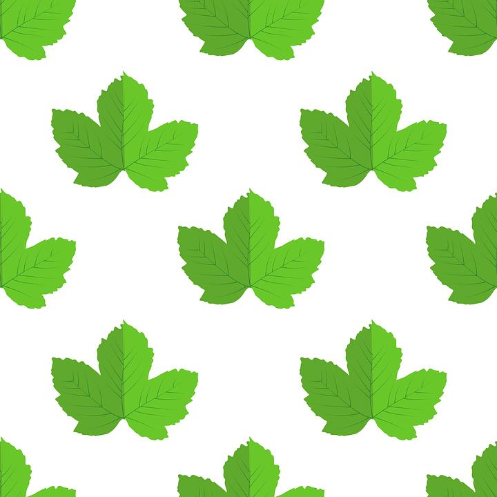 Leaves, Vector, Nature, Summer, Illustration, Plant