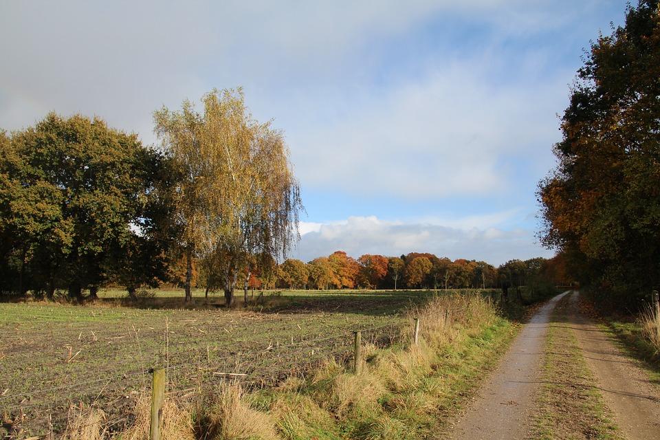 Netherlands, Landscape, Veluwe, Nature, Fall Colors