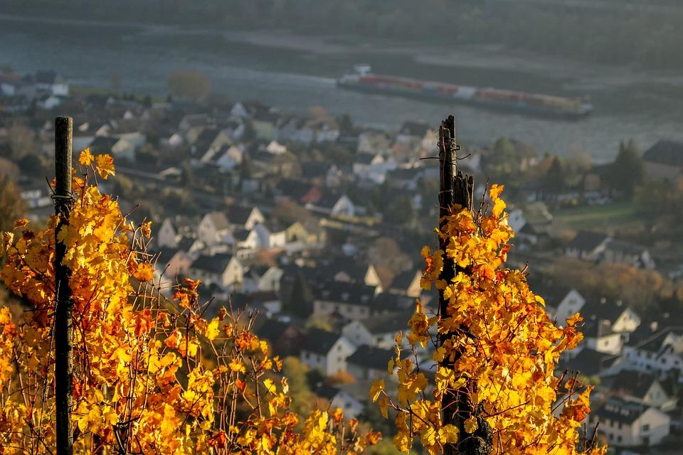 Autumn, Nature, Landscape, Vine, Wine, Vines, Yellow