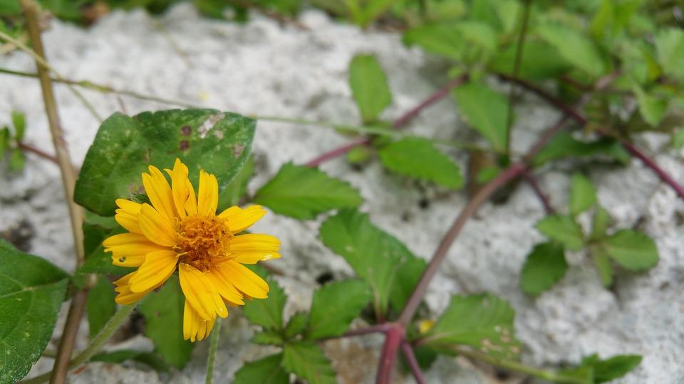 Wild Flower, Yellow Flower, Vines, Bloom, Nature