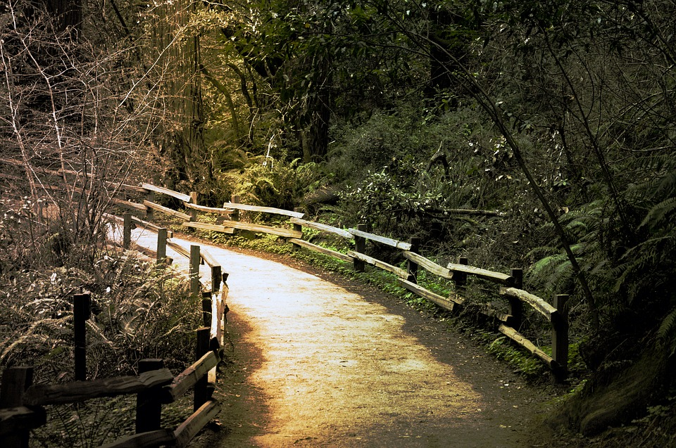 Walking, Path, Nature, Outdoors, Muir Woods