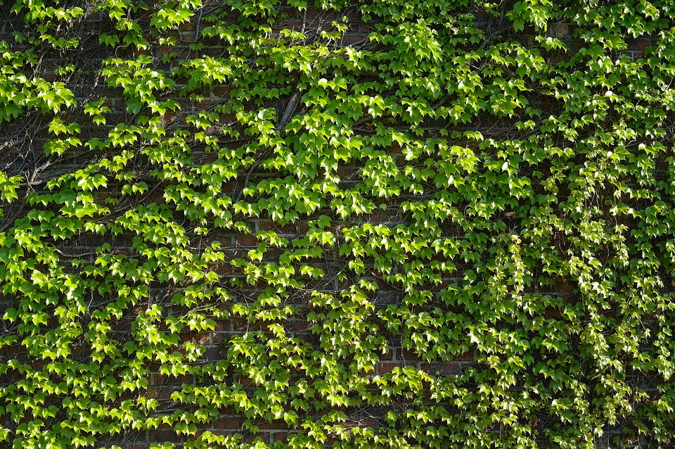 Leaf, Plants, Nature, Environment, Wallpaper, Outdoors