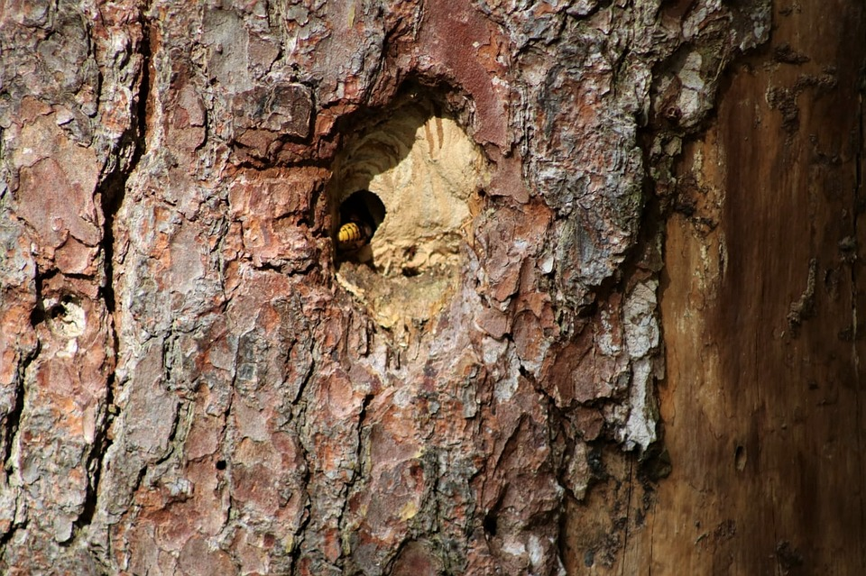Wasps On The Tree, Hollow, Nest, Nature