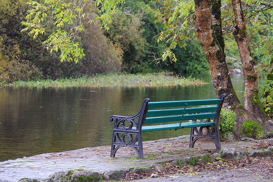 Wood, Nature, Tree, Bench, Water, Fall, Season, River