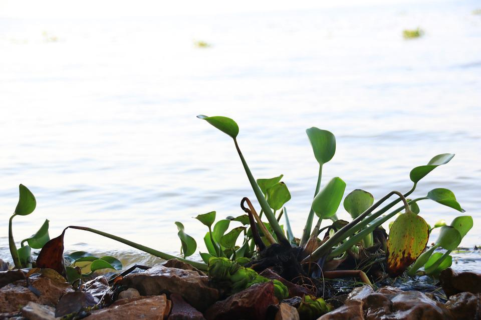 Nature, Green, Leaf, Natural, Plant, Beach, Water