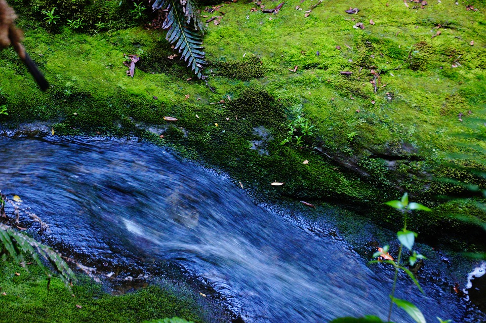 Water, Fluent, River, Green, Nature