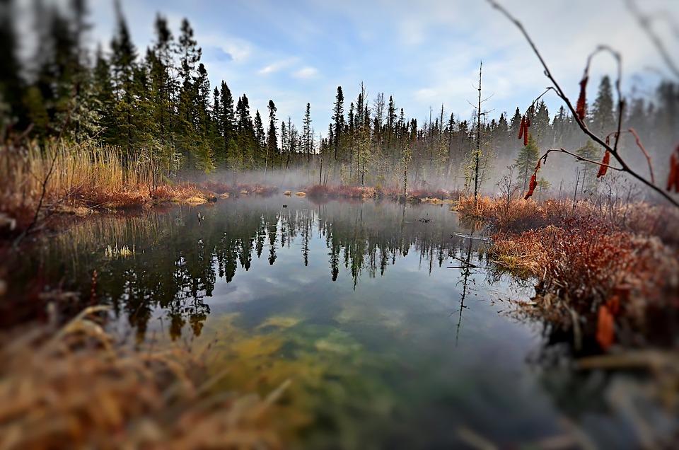 Landscape, Marsh, Nature, Water, Trees, Sky, Québec