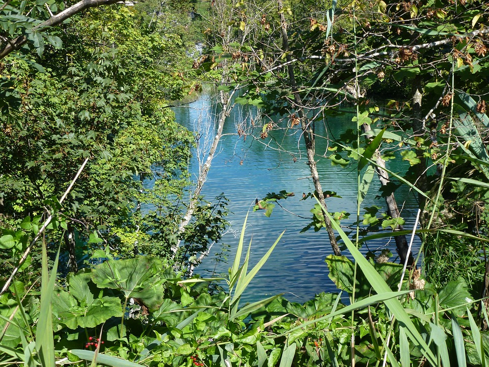 Plitvice Lakes, Croatia, Water, Bush, Tree, Nature