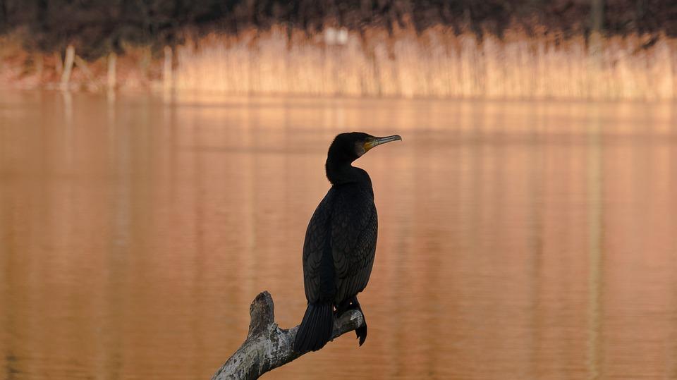 Bird, Nature, Waters, Animal World, Lake