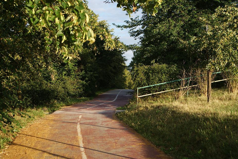 Way, Nature, Landscape, Road, Forest, The Path, Tree
