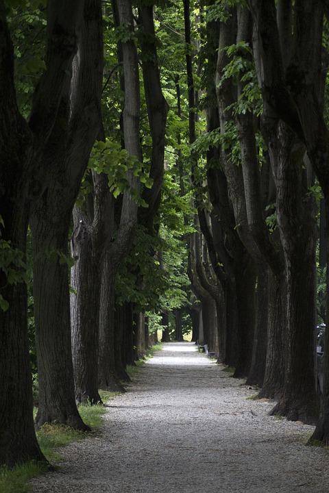 Street, Trees, Road, Nature, Tree, Way
