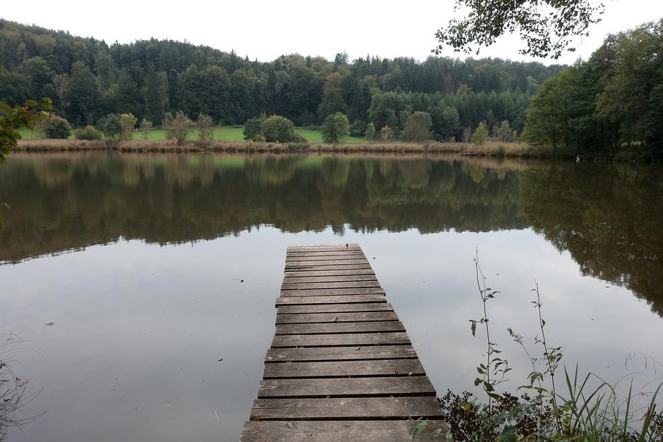 Lake, Pond, Web, Nature, Water, Landscape, Forest