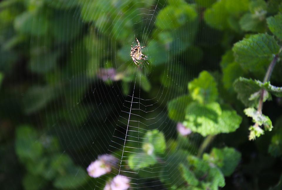 Spider, Web, Nature, Insect, Net, Design, Spiderweb