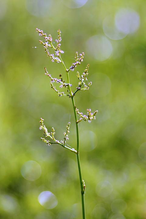 Sprig, Weed, Green, Bokeh, Blurred Background, Nature