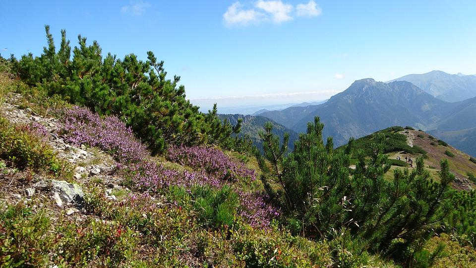 Tatry, Mountains, Landscape, Nature, Western Tatras